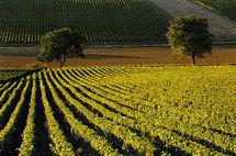 Etude sur les bars à vins français