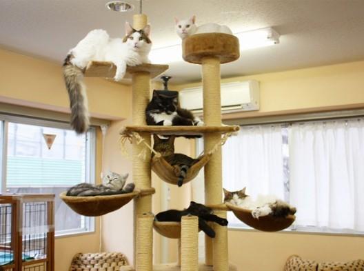 le caf des chats le premier bar chat de la capitale. Black Bedroom Furniture Sets. Home Design Ideas