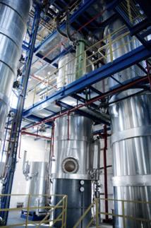 La distillerie Belvedere