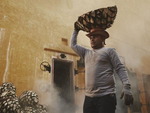 José Cuervo part à la recherche de son nouveau Don Of Téquila