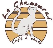 Lyon bientôt doté de son bar à chats