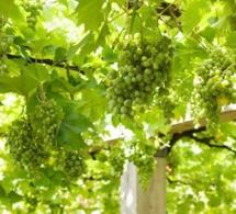 Dans quelle région française consomme-t-on le plus de vin ?
