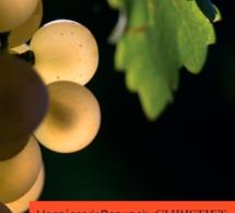 Vente des vins des Hospices de Beaune 2014 : nouveau record !