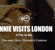 Annie the Owl : Pop-up bar à hiboux à Londres
