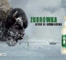 Zubrowka  revient en campagne